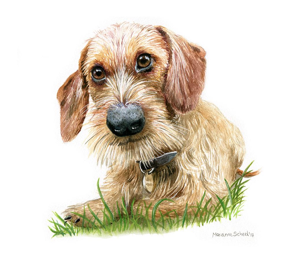 pet-dog-portrait.jpg