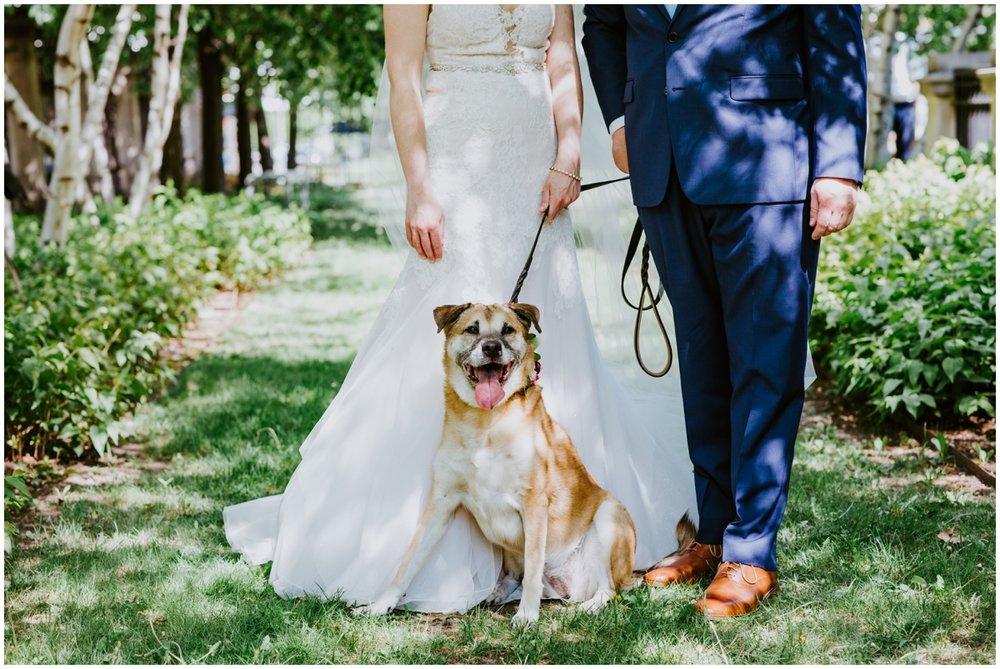 wedding dog with bride and groom