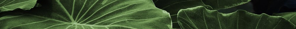 leaf-leaves-colorful-green-57436.jpg