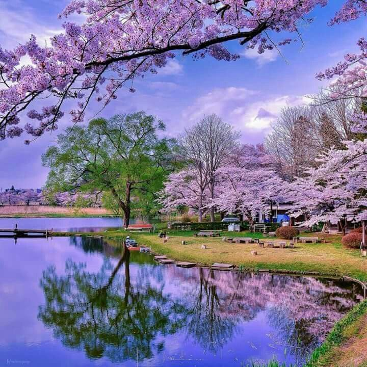 Asia in the Spring