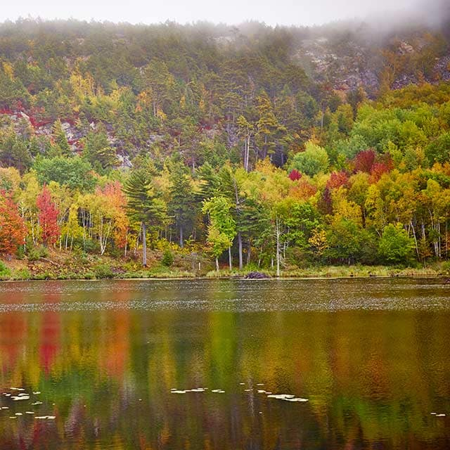 Fall Foliage from $929