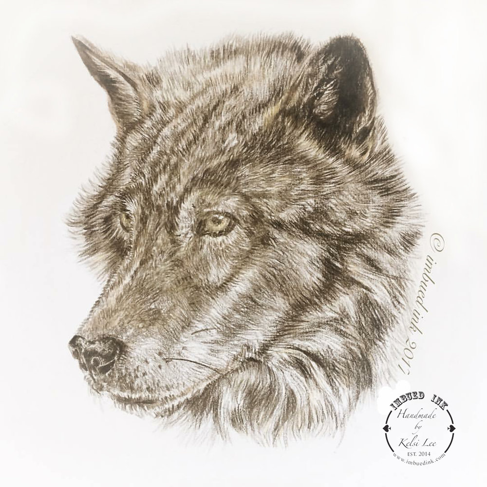 wolf colored pencil.jpg