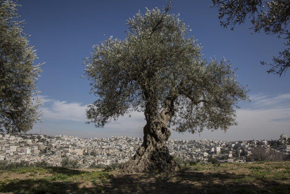 Jeruzalem17.1.jpg