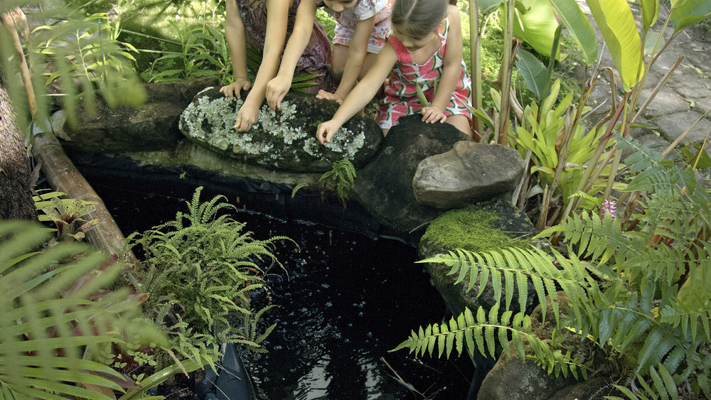 Did you know ponds and natural pools can be connected to your aquaponics system?