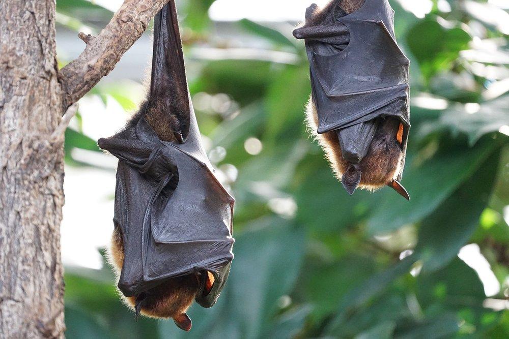 Ep 5: Please don't kill the bats!