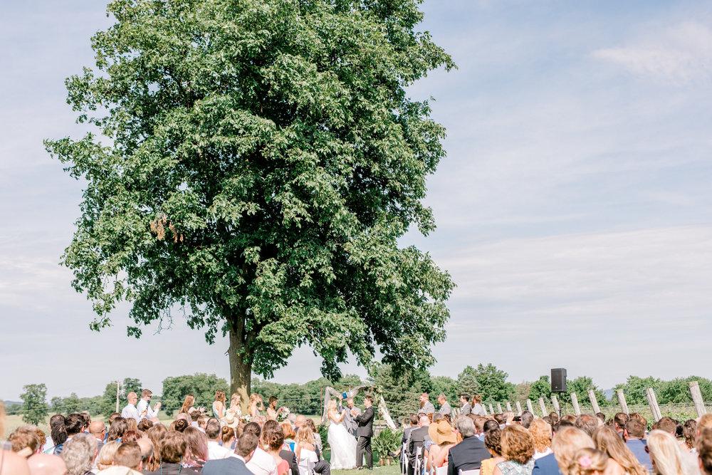 haley-richter-photography-fero-vineyards-summer-wedding-allison-and-josh-winery-pennsylvania-087.jpg