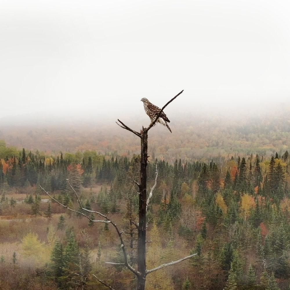 BirdForInstagram.jpg