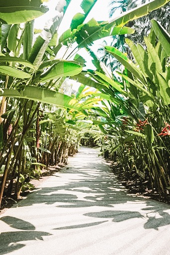Botanic Gardens - ボタニック・ガーデンで早朝散歩を。国土の1/3以上が緑地というシンガポール。ユネスコ世界遺産にも登録され、国立植物園の「ボタニックガーデン」。朝5時からやっているので、早朝ランニングや、ヨガ、のんびり散歩にオススメです。シンガポール在住の友人も散歩によくきている、現地の方にも愛されている場所だそう。
