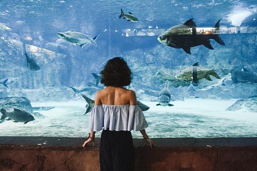 River Safariリバーサファリ - 世界最大の淡水生物専門の動物園シンガポールには有名な動物園がありますが、このリバーサファリもオススメです。比較的、観光客も少なく、ダイナミックなお魚たちをみることができます。私たちはここに何時間も時間を忘れてガラスの向こうを覗き込んでいました。リバーサファリはシンガポール動物園、ナイトサファリのお隣です。是非よってみてくださいね。