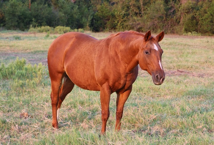 Boogie Woogie Fletch   Little Cow Boogie x Budhas Bay Fletch (Docs Budha x Jae Bar Fletch daughter)  Boogie is an NCHA money earner and producer. Boogie has been bred to Aspecial Firewater for a 2019 foal.