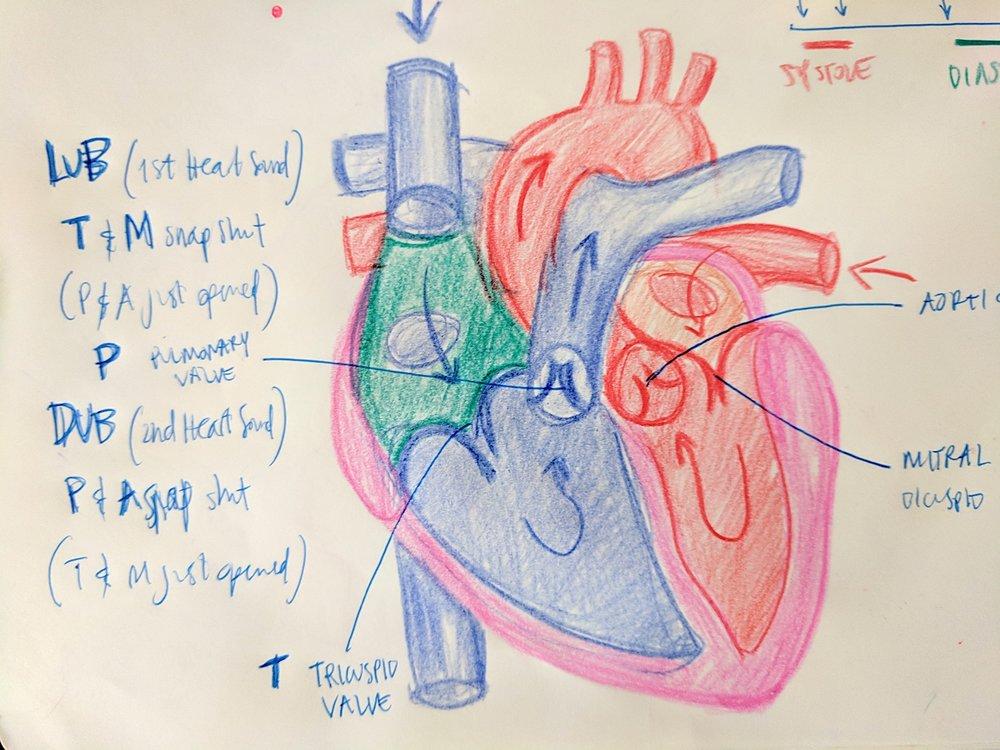 W11_Heart sketch.jpg