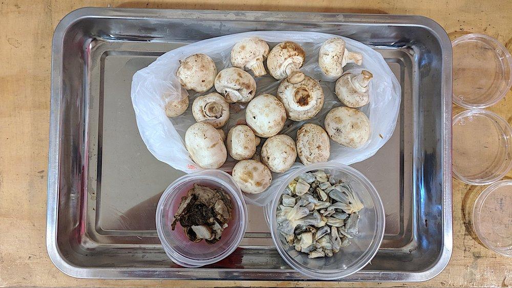 S2:W1_3 types of mushroom.jpg