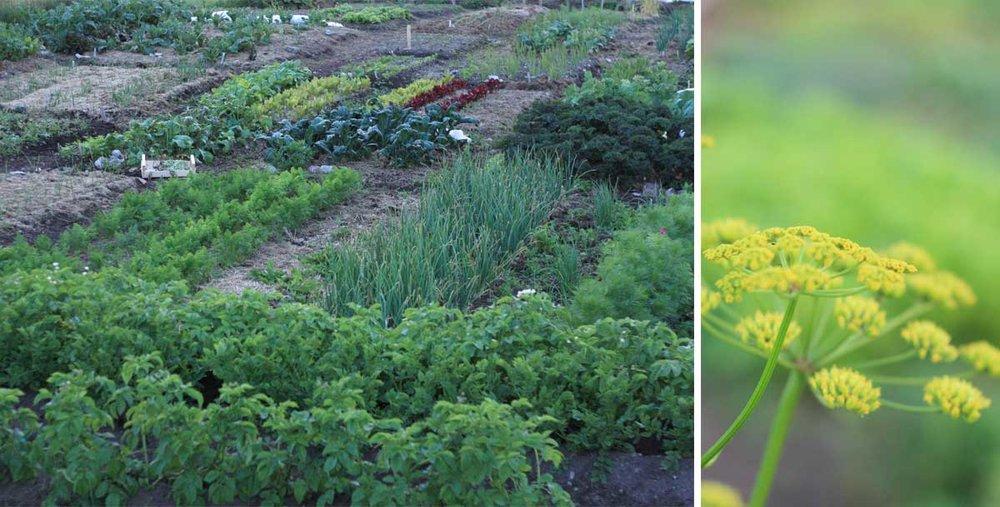 www_garden_large2.jpg