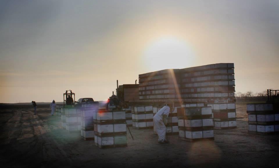 Inspektion av lastbilslast med bikupor, Californien, USA