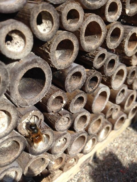 """""""Bihotell"""" - ett fint sätt att locka vilda pollinerare till sin trädgård"""