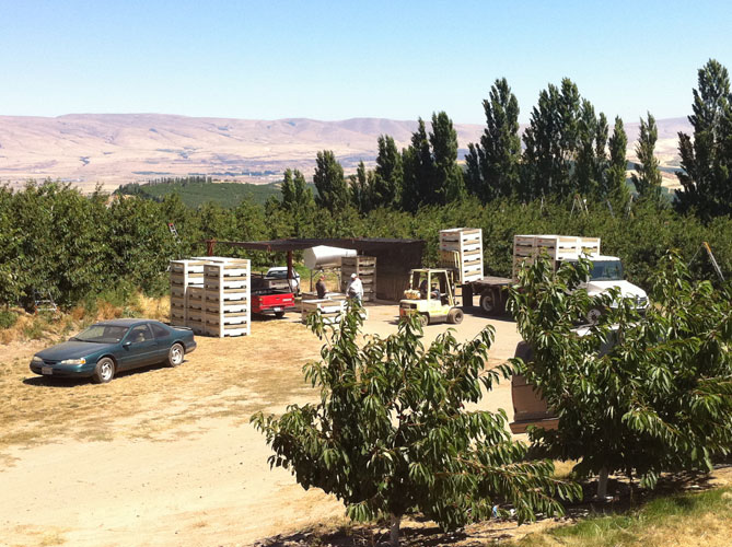 Harvest-Boxes.jpg
