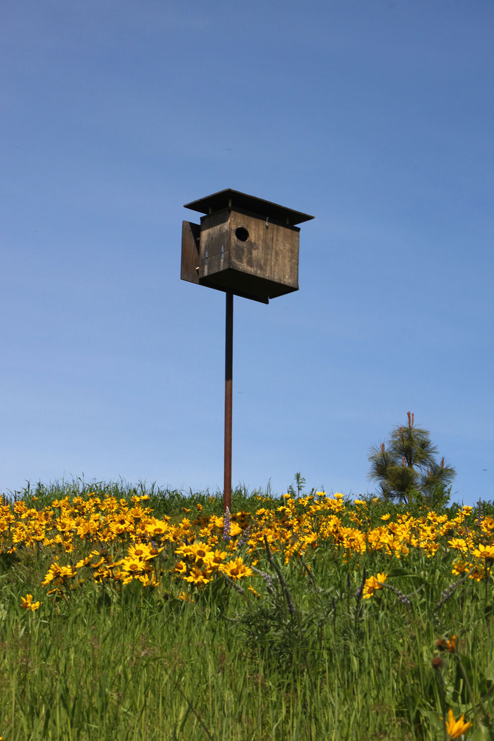 Conservation-Owl-Box-1.JPG