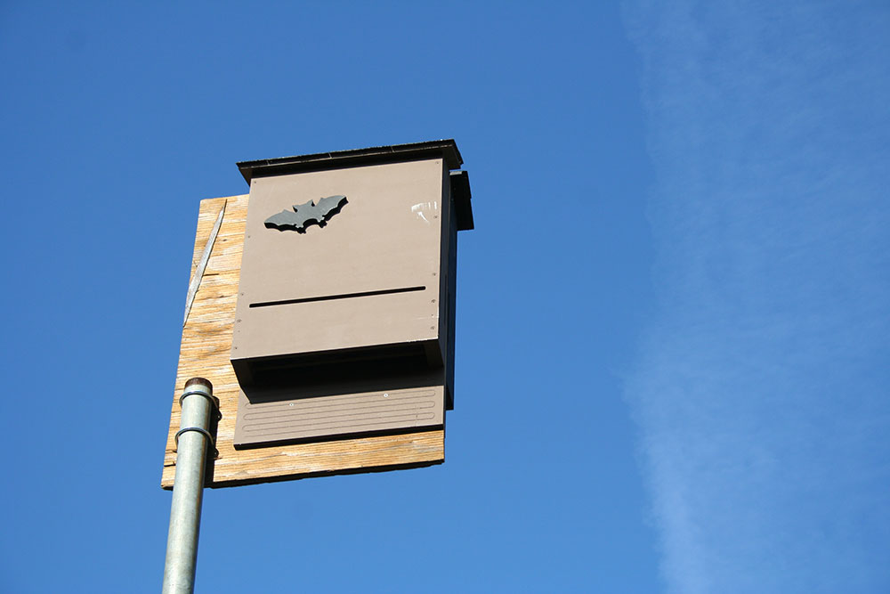 Conservation-Bat-Box-2.jpg