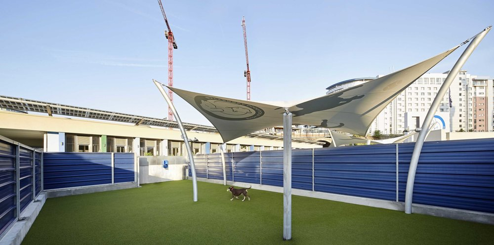 JCA_Battersea Dogs and Cats Home_©Hufton+Crow_001a.jpg