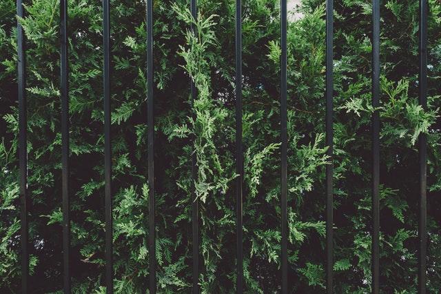 how-to-keep-your-backyard-secure5.jpeg