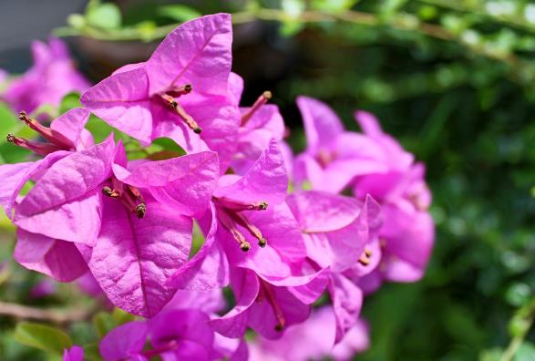Pink Flower Runey & Associates Wealth Management.png