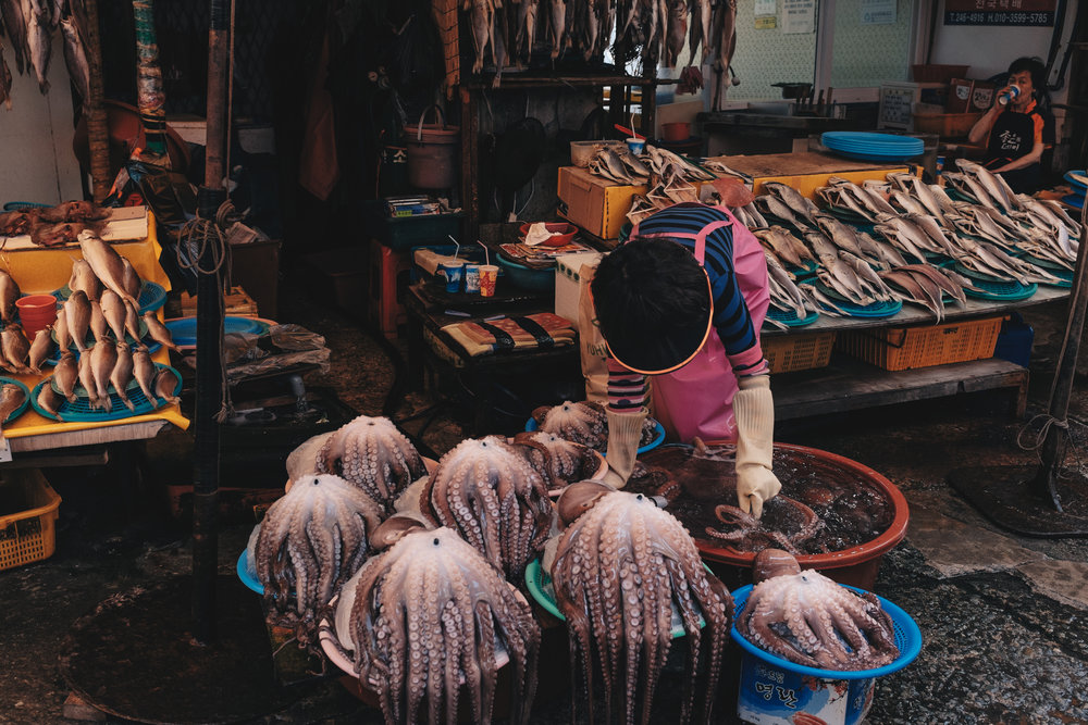 Korean octopuses are just as naughty as their Japanese counterparts