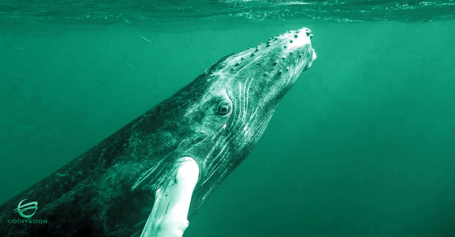 Whales under the surface… -
