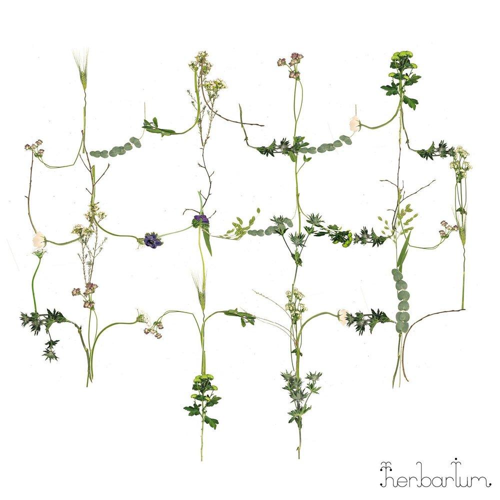Blommor Inomhus - Herbarium