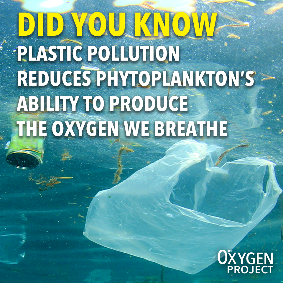 Plastic_Pollution_Meme1.png