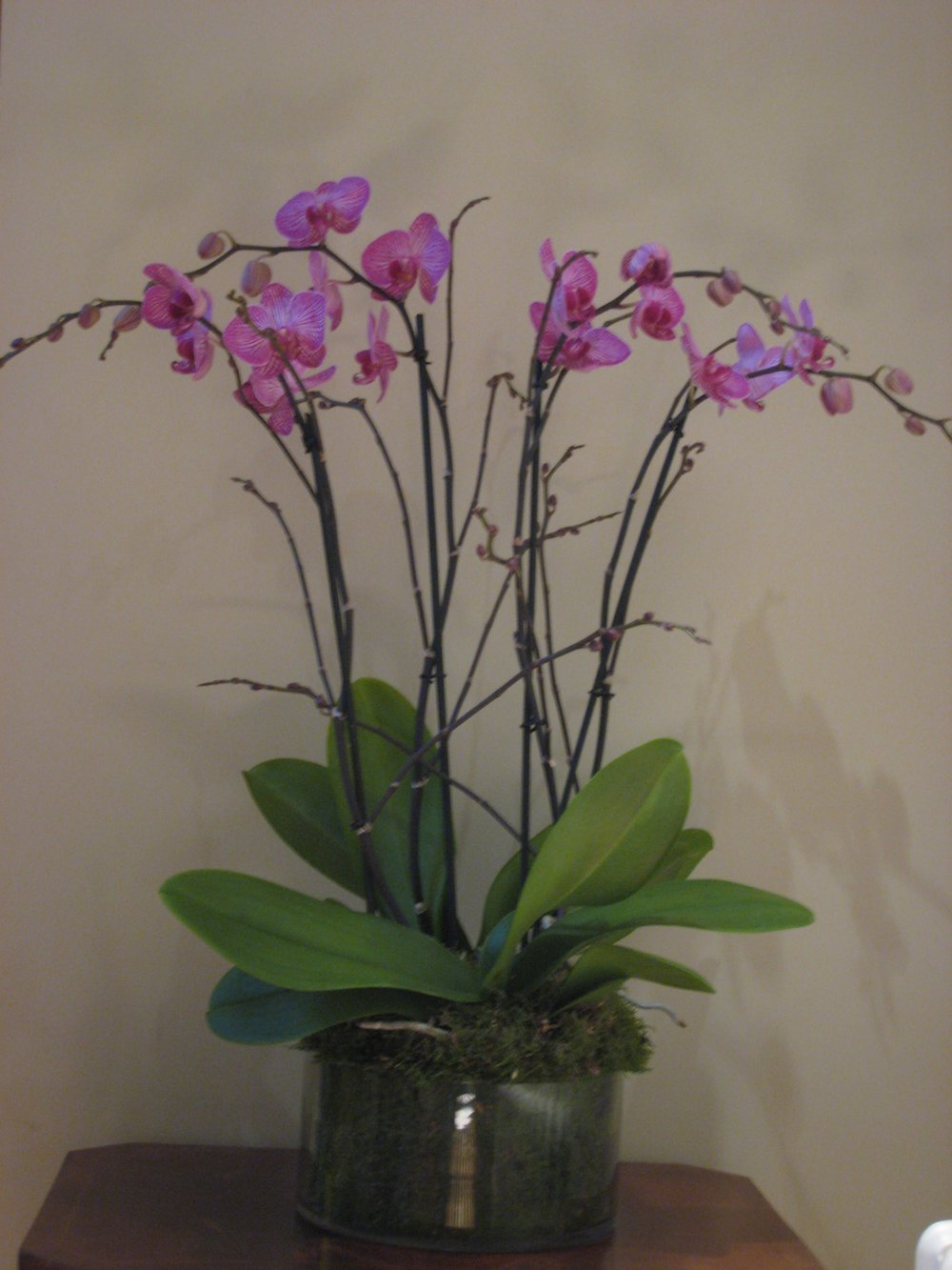 Medium glass bowl planted with two double stemmed orchids - £95 -