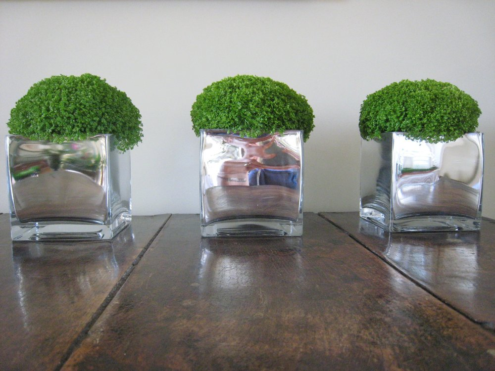 Medium square mirrored pots with 'Green Balls' - £35 each/3 for £90 -