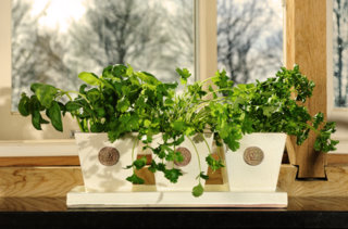 Tapered Herb pots & tray - Almond, Grape Green, Ivory  W: 13 x L: 38cm - £59