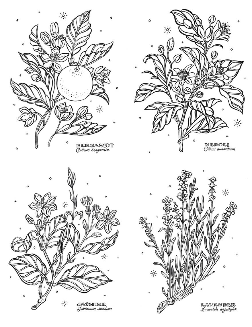 JillDeHaan_Botanicals.jpg