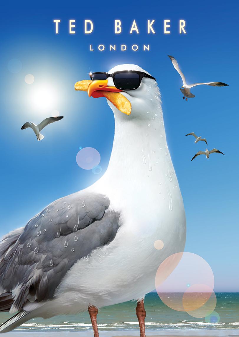 Seagull_TB.jpg