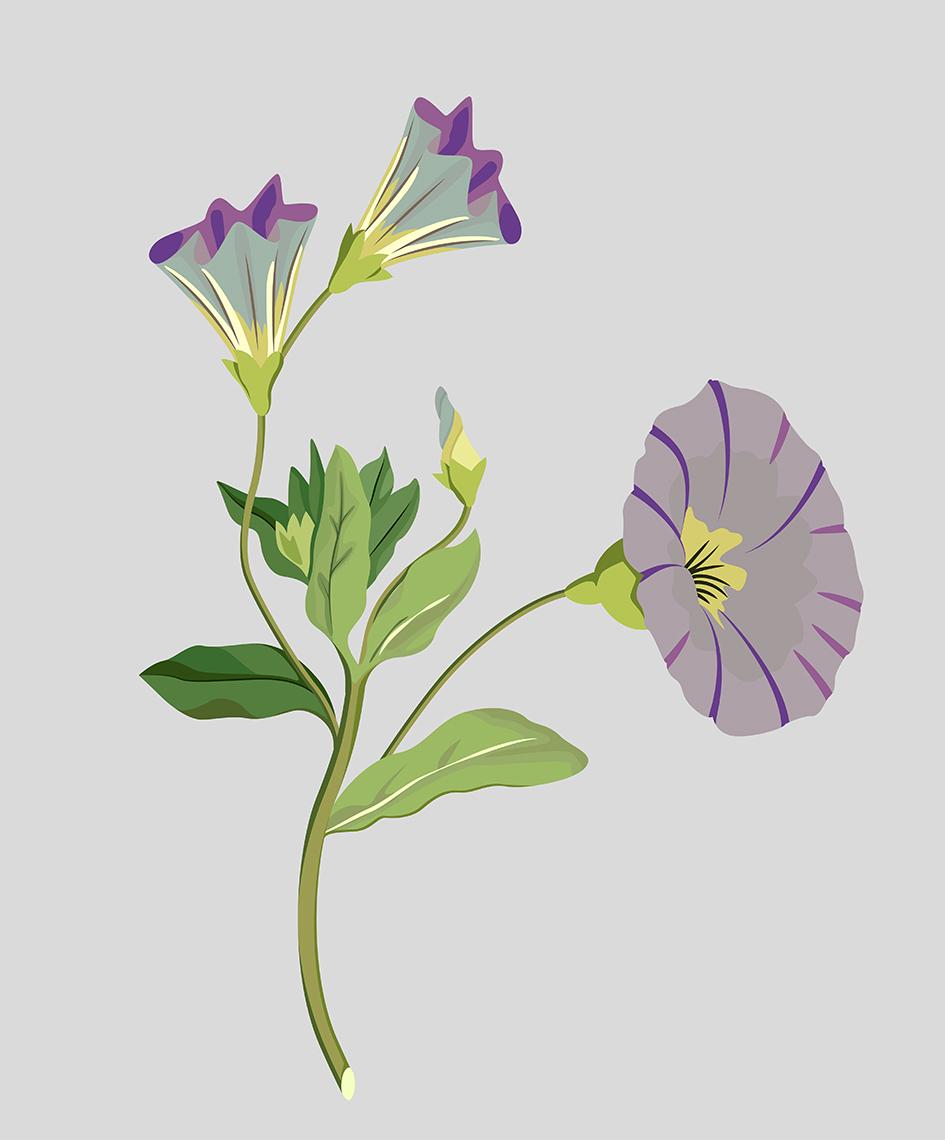 00_Flowers_02.jpg