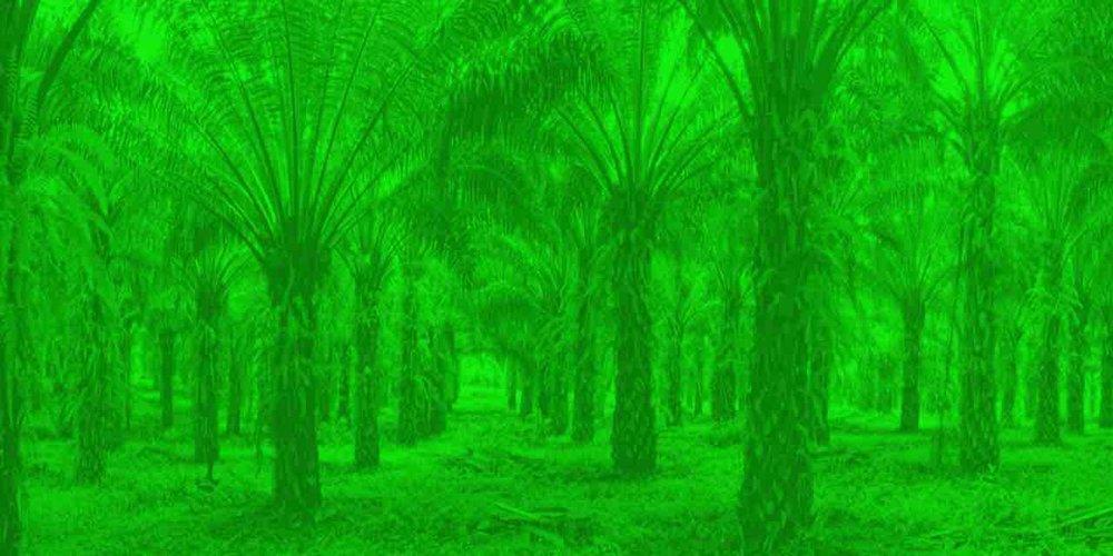 palms - Michael Taussig