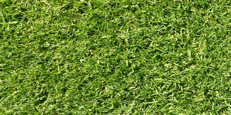 wintergreen-turf-grass-brisbane.jpg