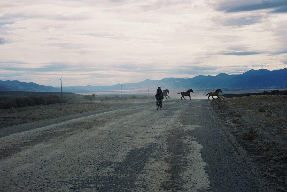 californiaceddarvillehorses.jpg
