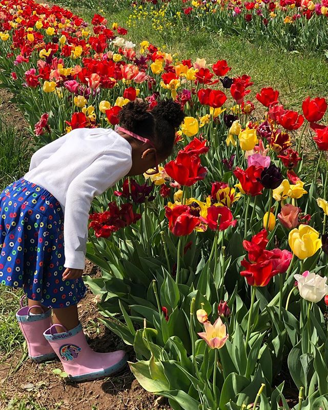 Just stopping to smell the tulips! Going to @burnsidefarms was the best Easter weekend activity! Definitely think we will make this a yearly tradition! 💐 . . . #easter #tulips #dcmomsblog #momswithcameras #weekendfun