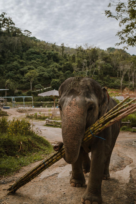Thailand-304.jpg