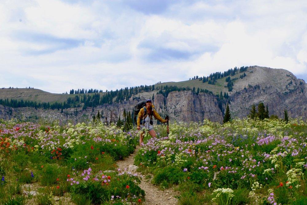 More Teton Wildflowers