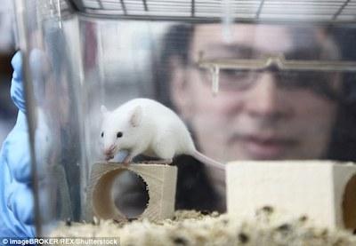 mice2.jpg