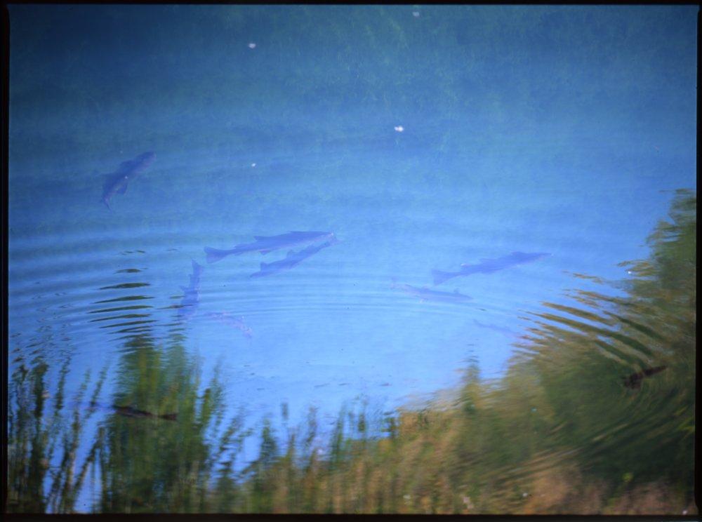 Fish - Fall.jpg