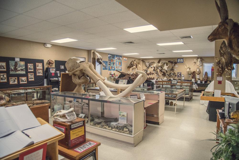 Prehistoric mammals.