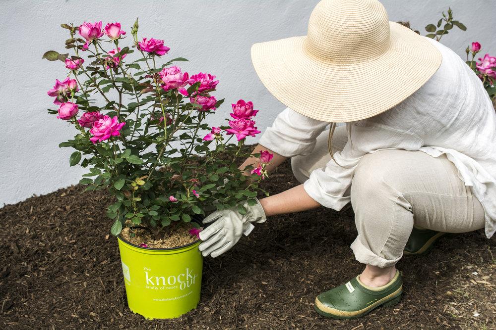 ko-planting-1.jpg