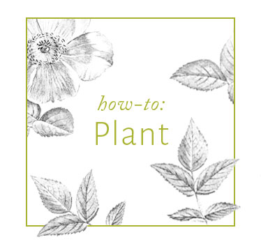 EasyCare_Plant.jpg