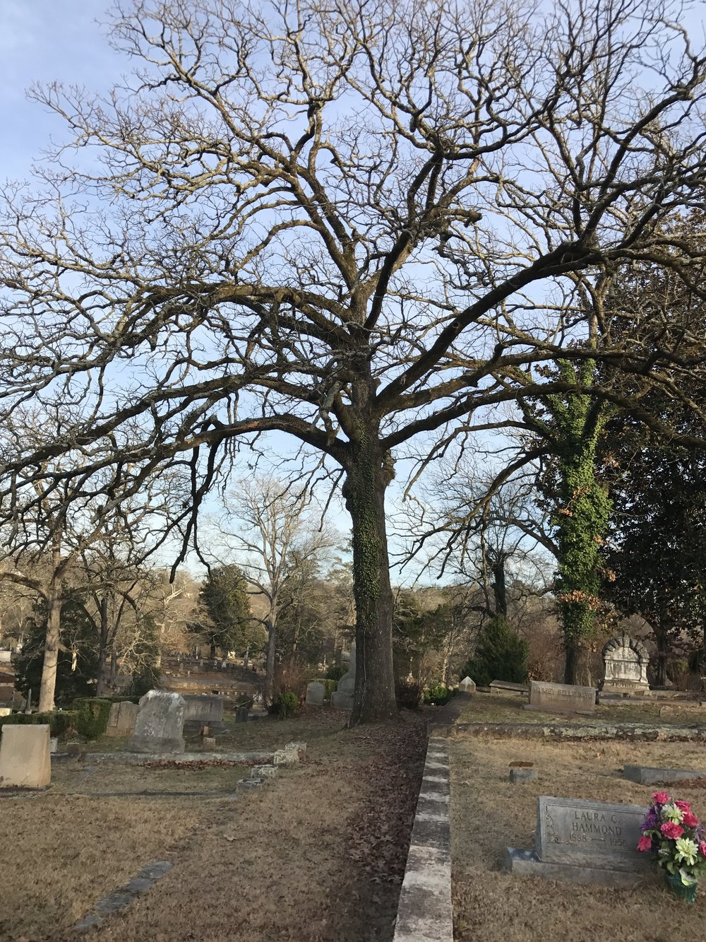 Work was completed in early 2017 on the tree maintenance plan for the burial ground.