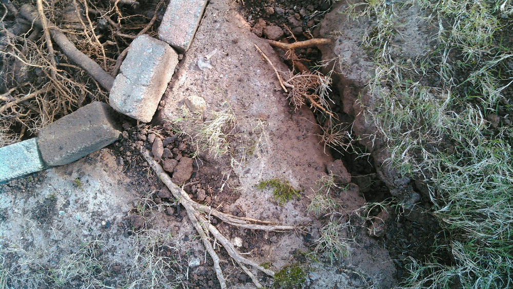 A common sign of tree root issues that need the attention of an arborist