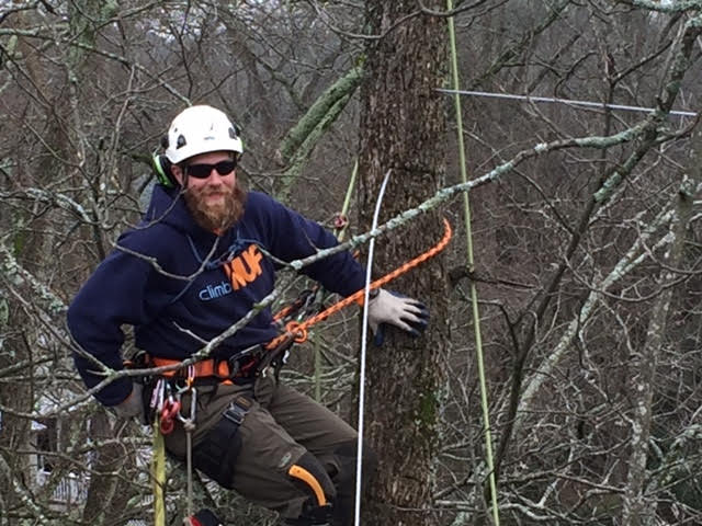 NUF Cabling Expert hangs out in a tree while installing a tree cable