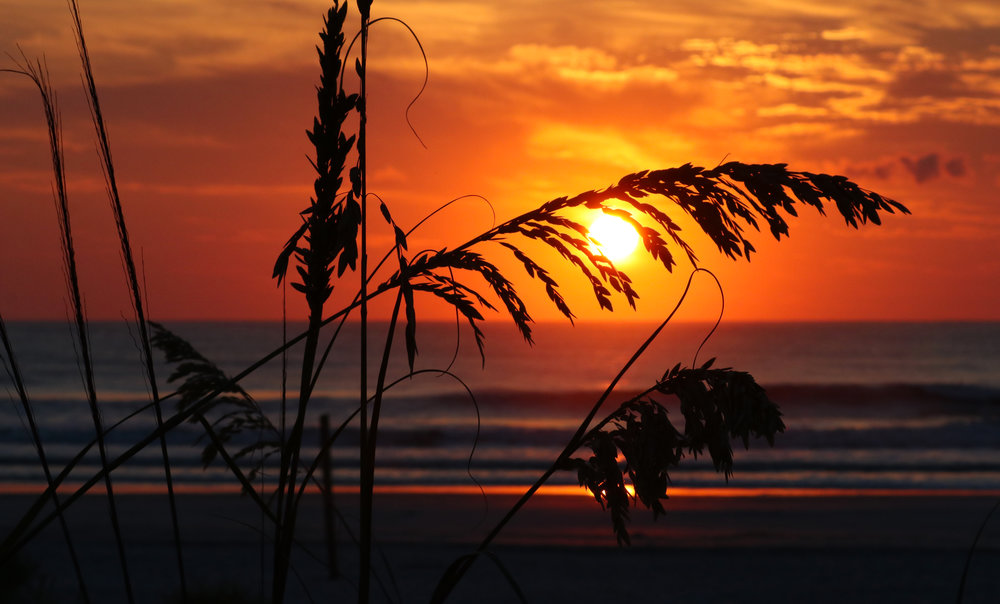 Sunrise Sea Oats